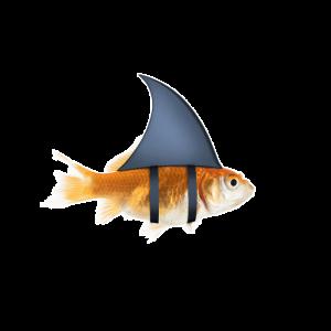 Fisch mit Haiflosse